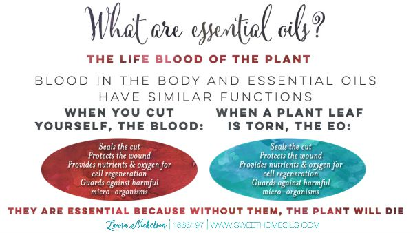 What ARE Essential Oils? | Find out more at TheTurquoiseHome.com