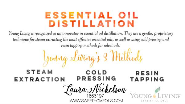 4c-Extracting-Essential-Oils