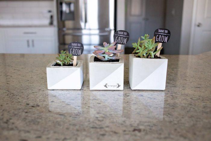 Cement-Succulent-Planter-Teacher-Gift-_-Five-Marigolds