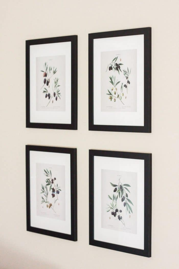 Olive Gallery Botanical Prints