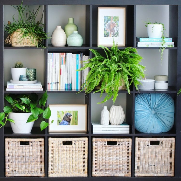 Bookshelf Styling with Greenery