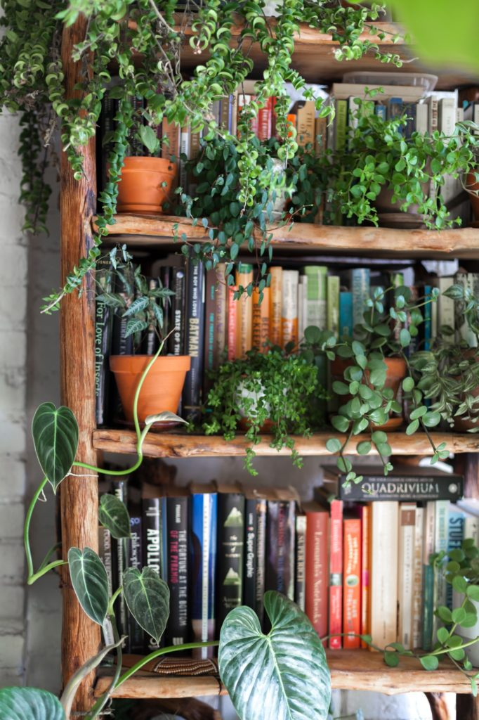 How to Decorate a Bookshelf -->> lots of plants and books!