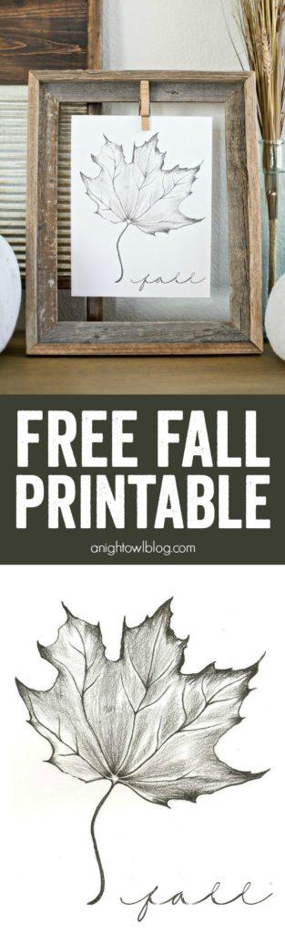 Maple Leaf Sketch Printable | 25+ Free Fall Printables