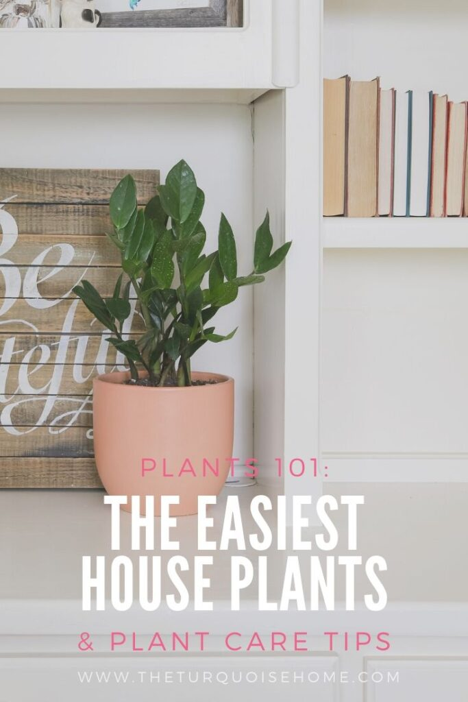easiest house plants