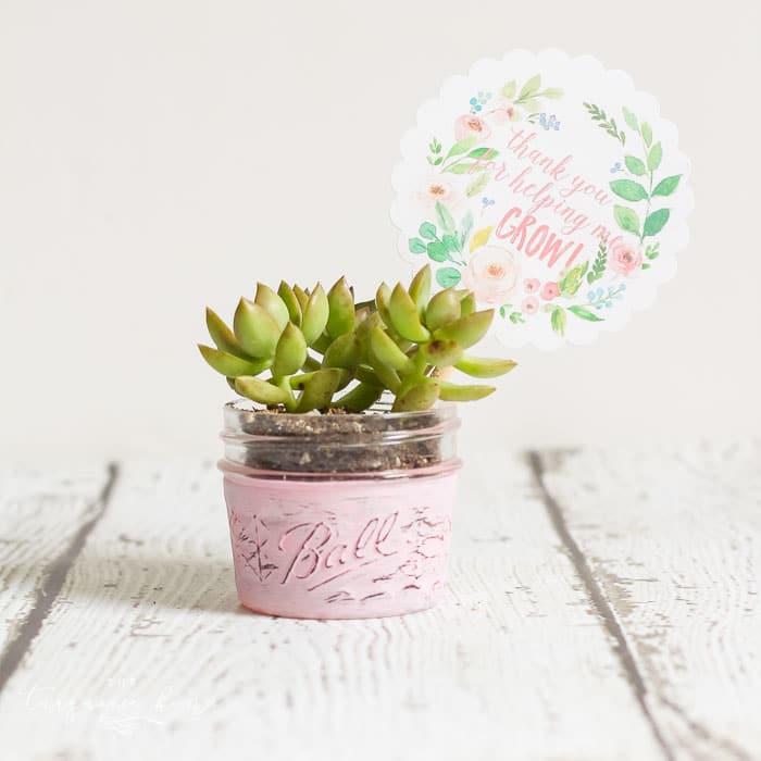 Succulent planter with a free printable tag for teacher appreciaton